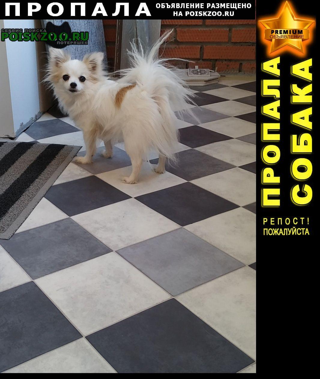 Пропала собака нашедшему 20 000 Томск