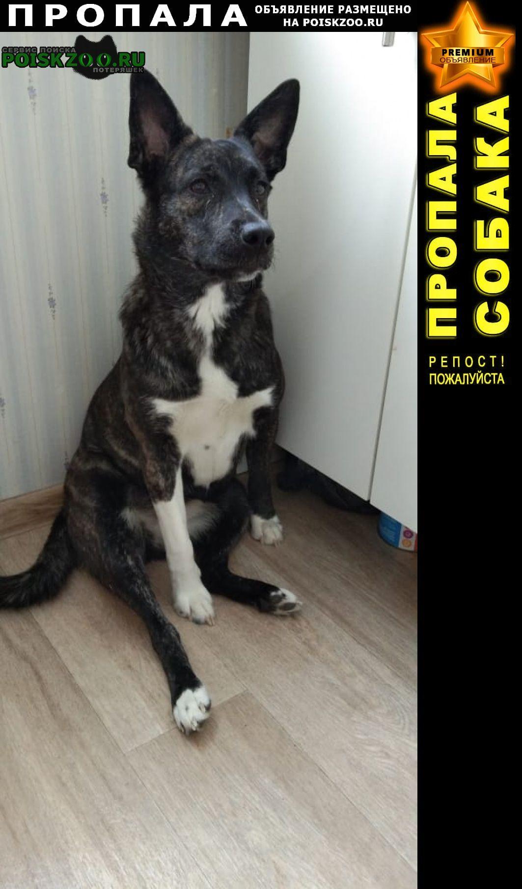 Мошково Пропала собака