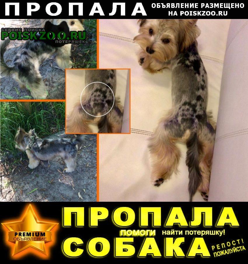 Пропала собака кобель йорк Москва