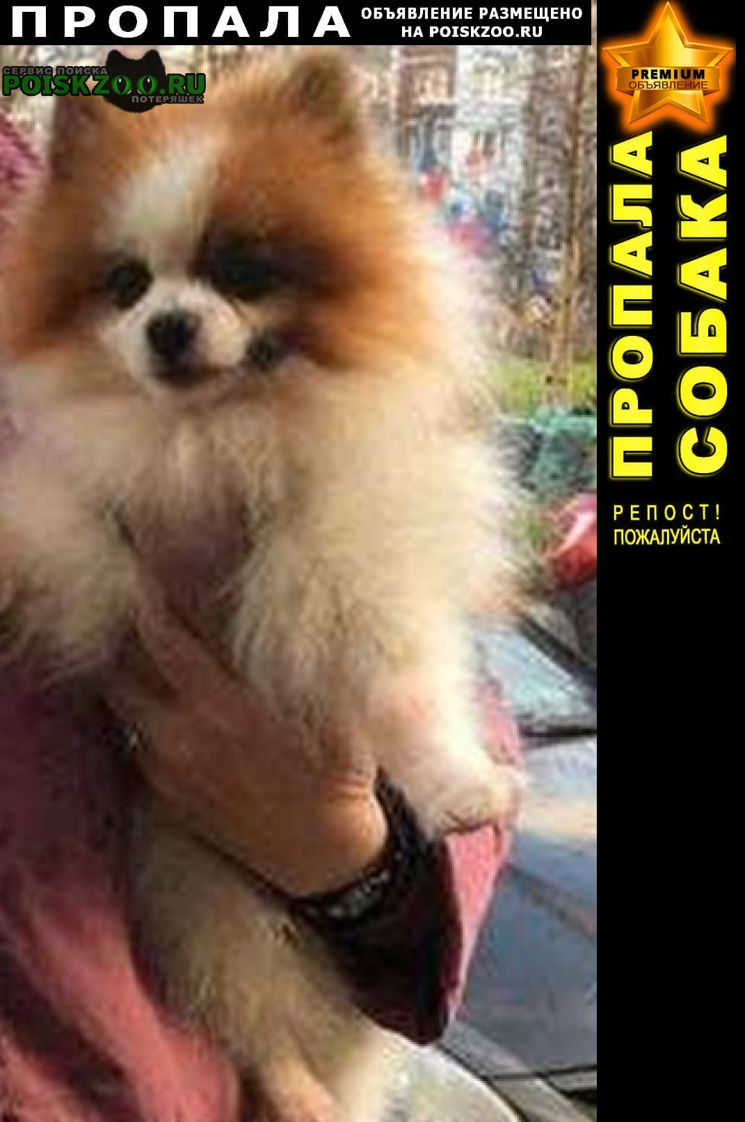 Санкт-Петербург Пропала собака кобель помогите найти, пожалуйста