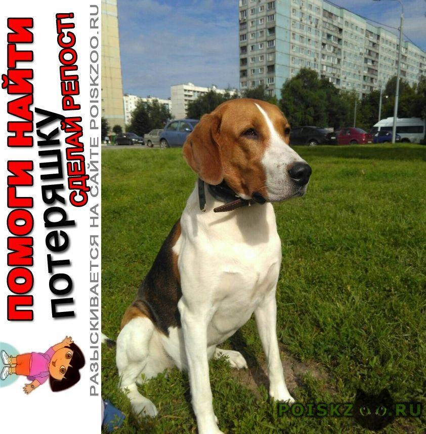 Пропала собака кобель г.Белоусово