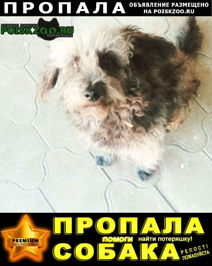 Пропала собака кобель любим верим ждём Астрахань