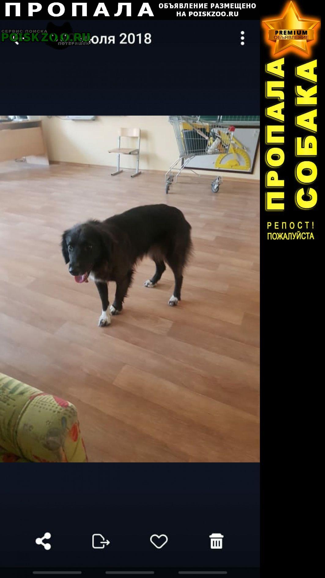 Пропала собака Заплюсье
