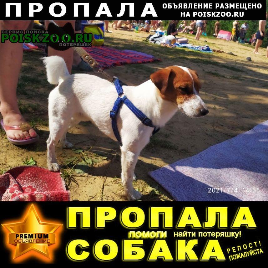Пропала собака кобель джек рассел терьер Санкт-Петербург