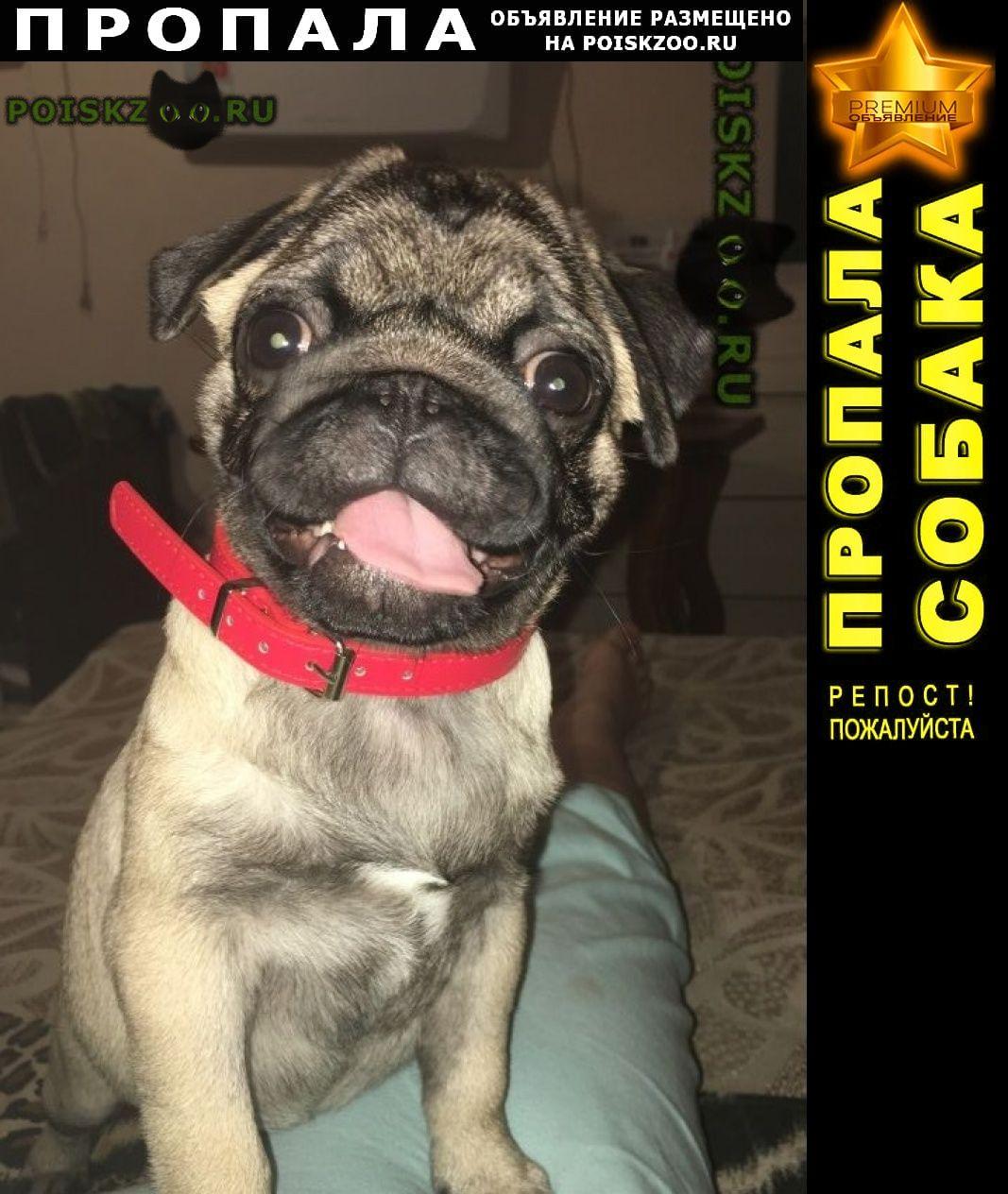 Пропала собака Таганрог