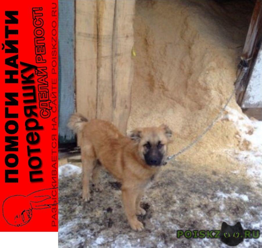 Пропала собака помогите найти и вернуть домой г.Кострома