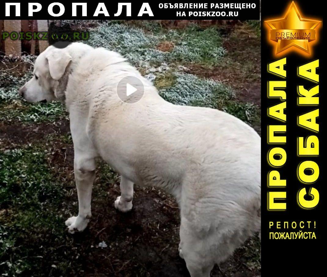 Пропала собака кобель зевс г.Ставрополь