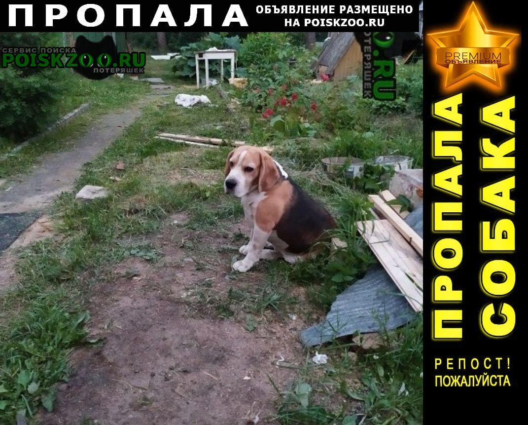 Пропала собака кобель Тосно