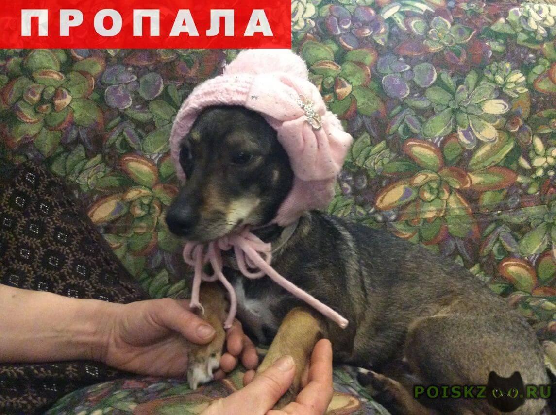 Пропала собака г.Раменское