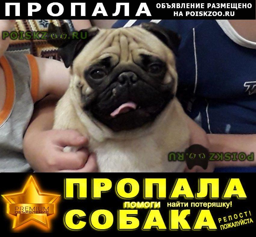 Пропала собака кобель г.Братск