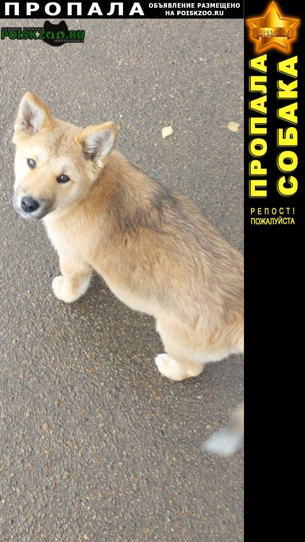 Пропала собака Ангарск