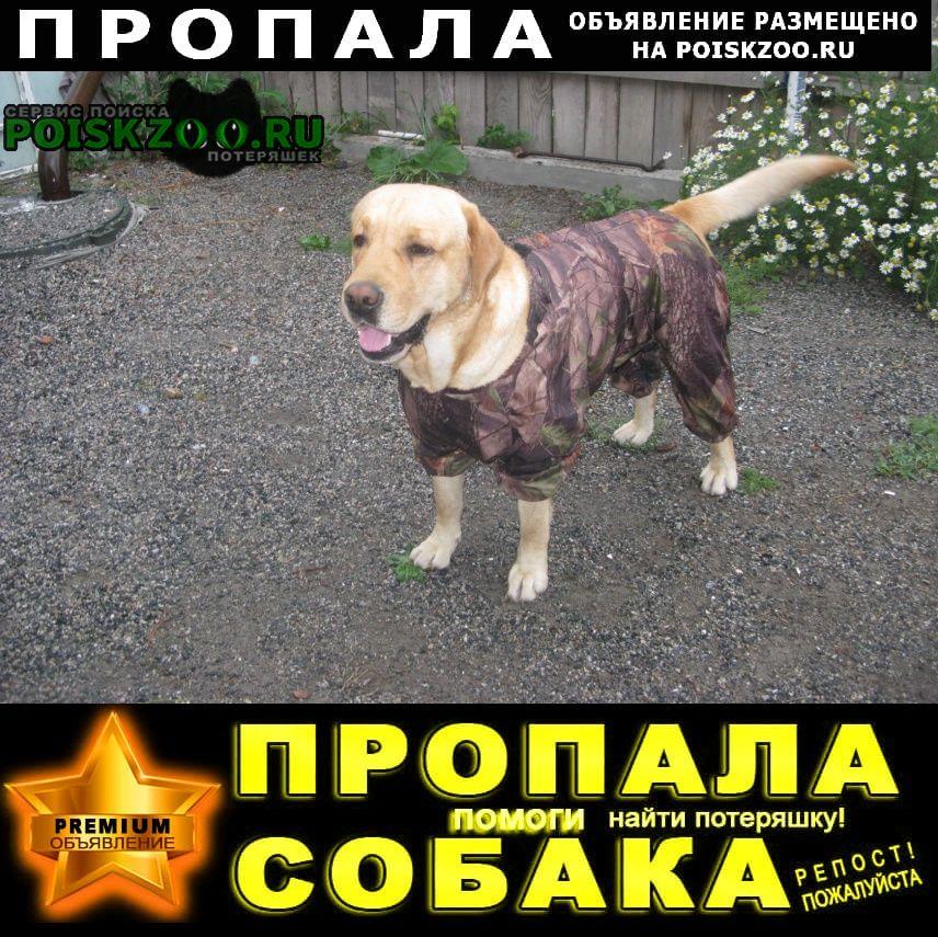 Пропала собака кобель розыск: увезли или погибла Ордынское