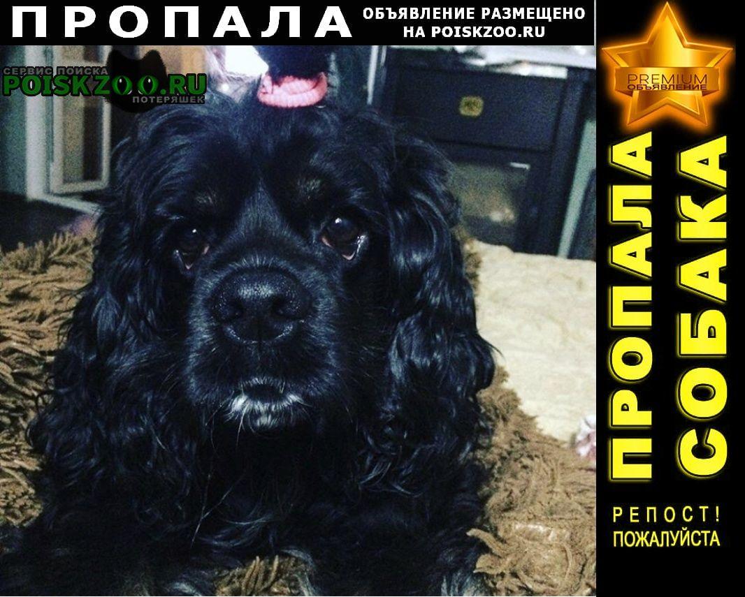 Тверь Пропала собака 12 сентября универсал на тракторной