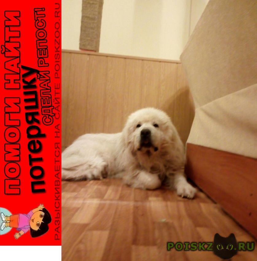 Пропала собака кобель пожалуйста, помогите в поиске г.Солнечногорск