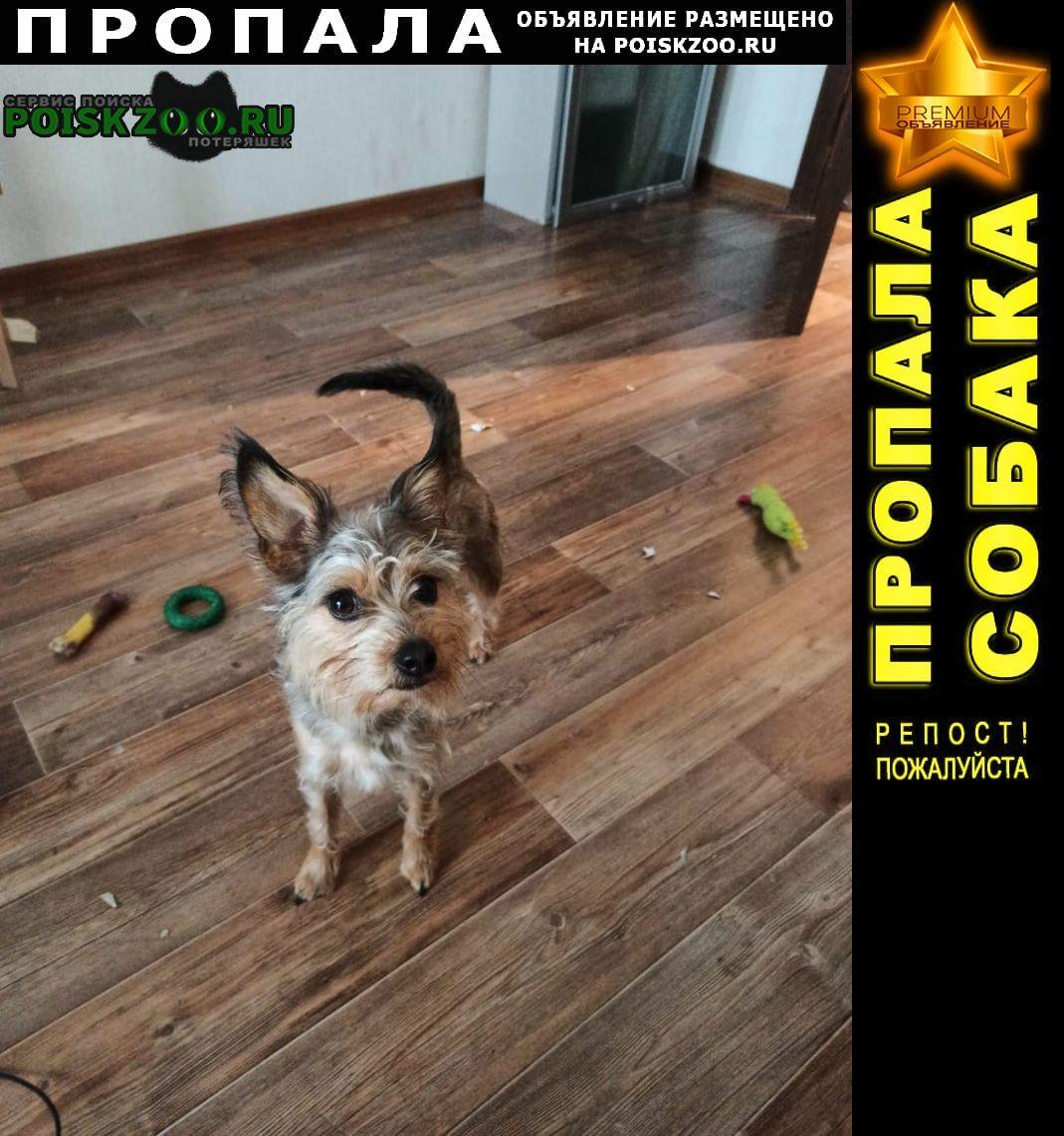 Владивосток Пропала собака в районе 2 речки