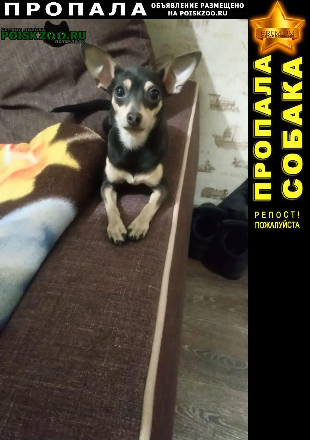 Пропала собака потерялась девочка той терьер возраст 1 Новокузнецк