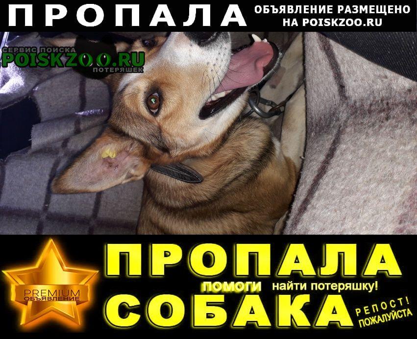 Пропала собака Конаково