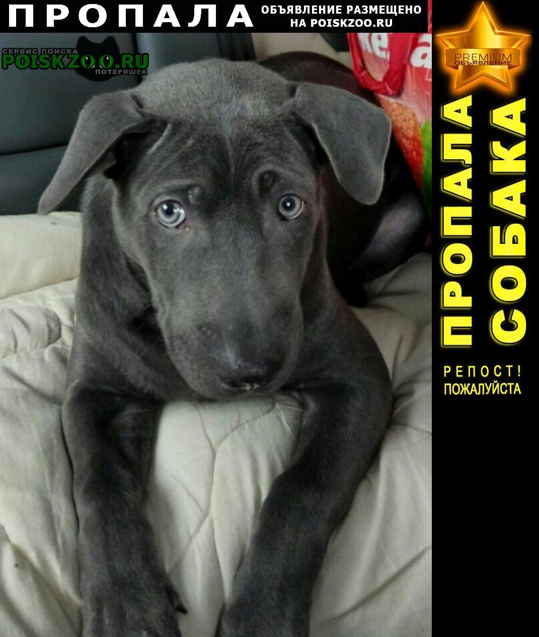 Пропала собака кобель щенок г.Красноярск