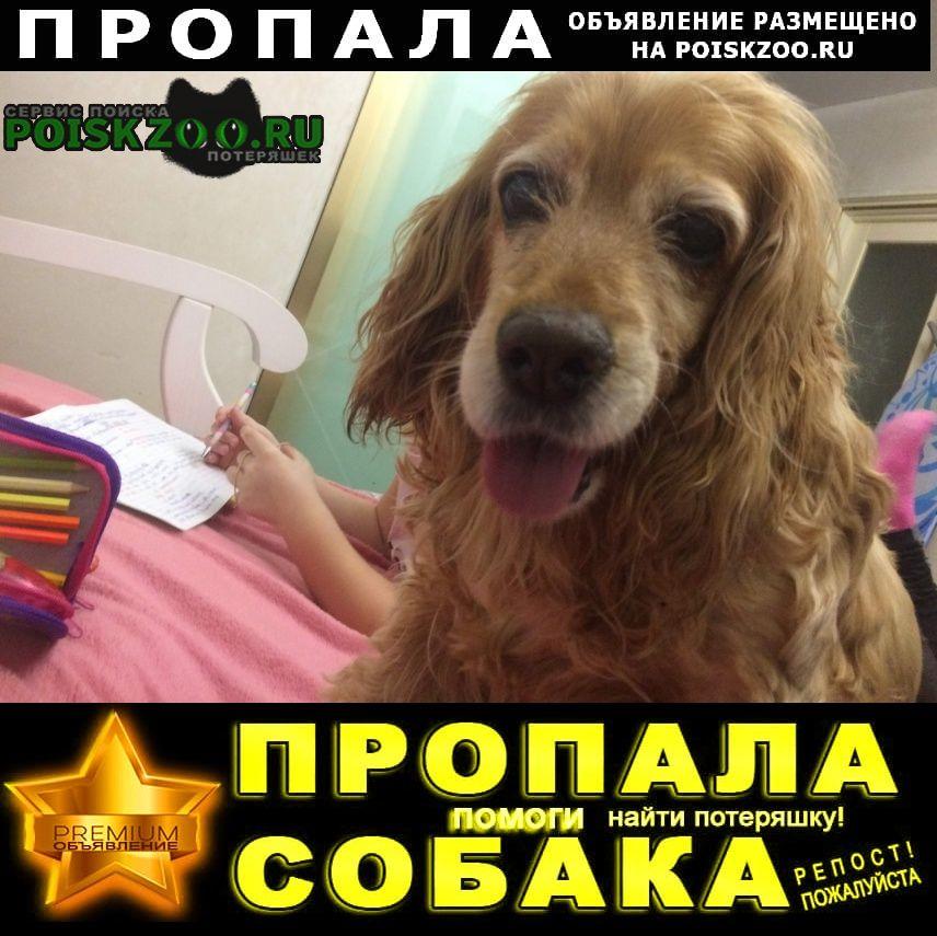 Пропала собака Олонец