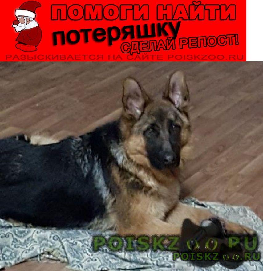 Пропала собака кобель немец г.Средняя Ахтуба
