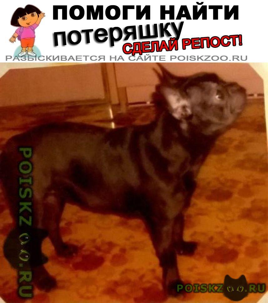 Пропала собака г.Сысерть