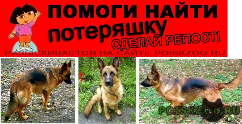 Пропала собака г.Пески (Московская обл.)