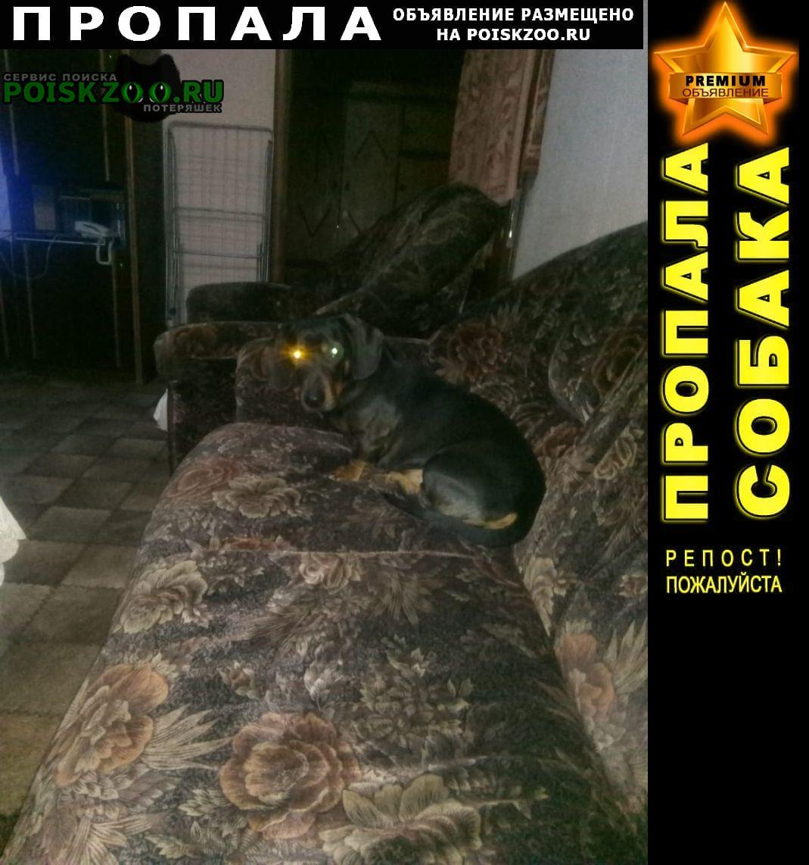 Пропала собака кобель помогите найти Краснодар