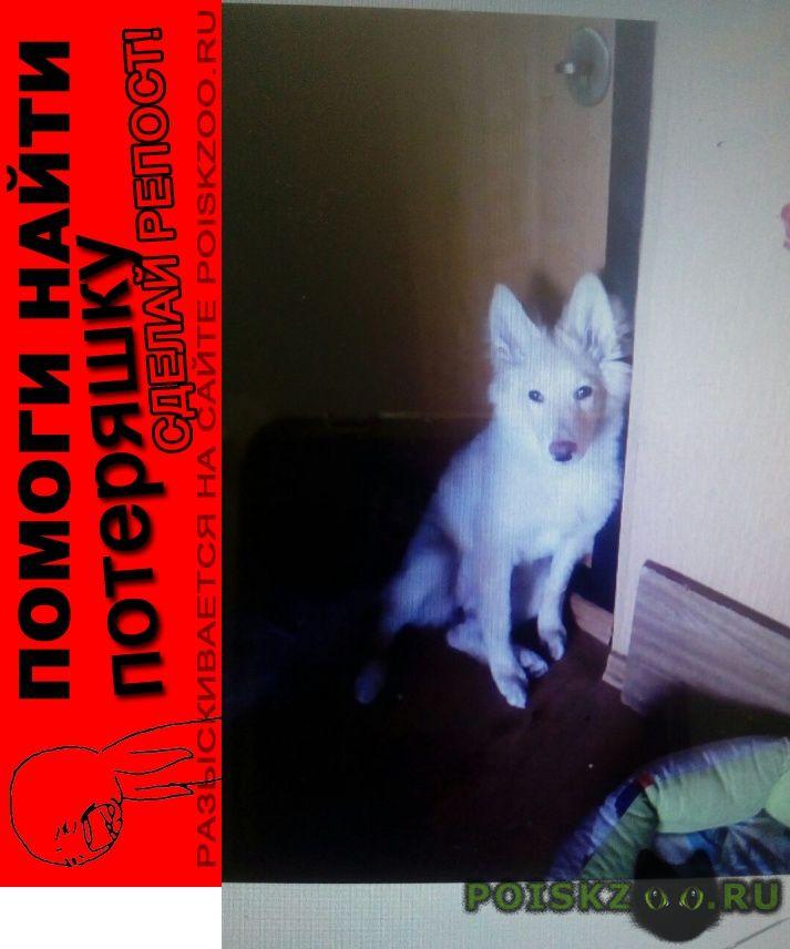 Пропала собака помогите найти г.Волжский (Волгоградская обл.)