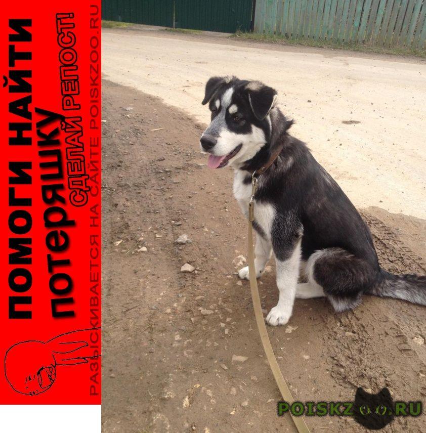 Пропала собака г.Подольск