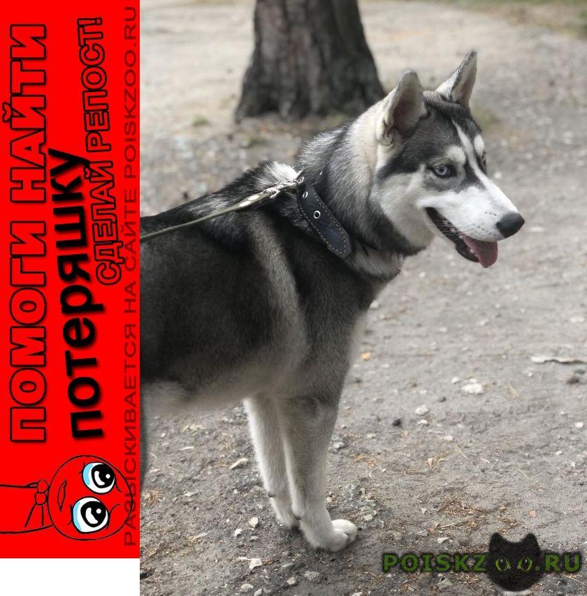 Пропала собака это наш член семьи   г.Пенза