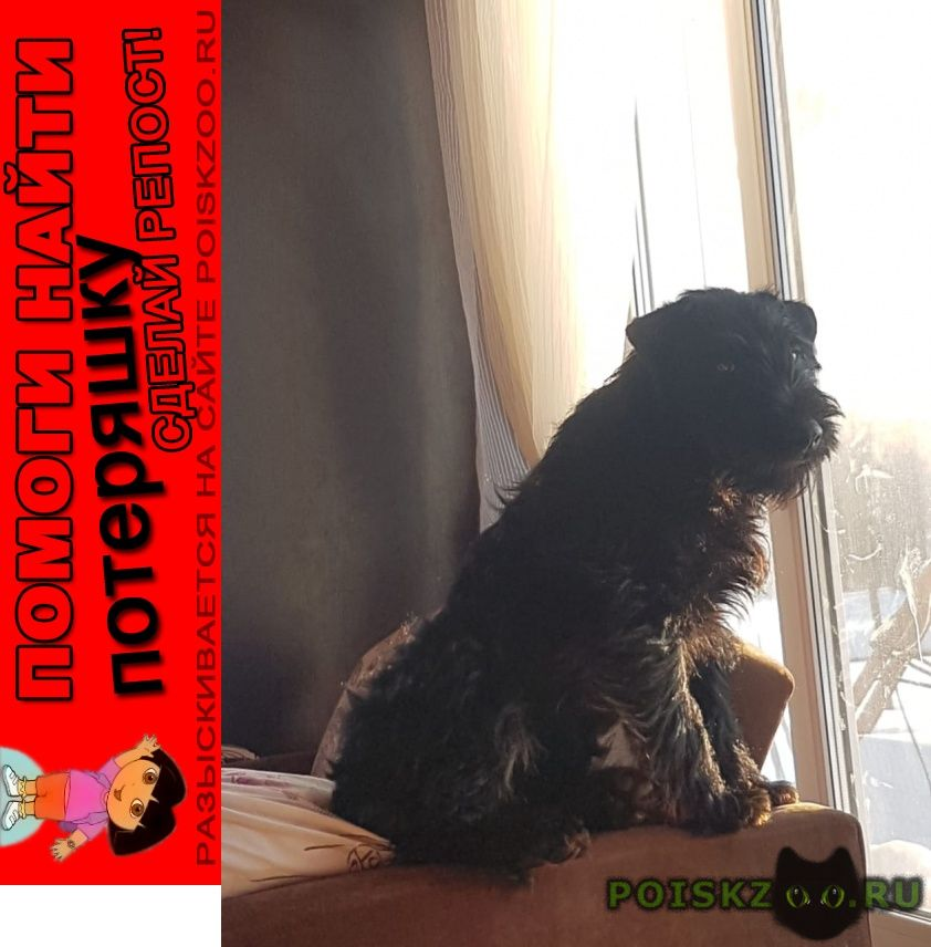 Пропала собака кобель член семьи  г.Томск