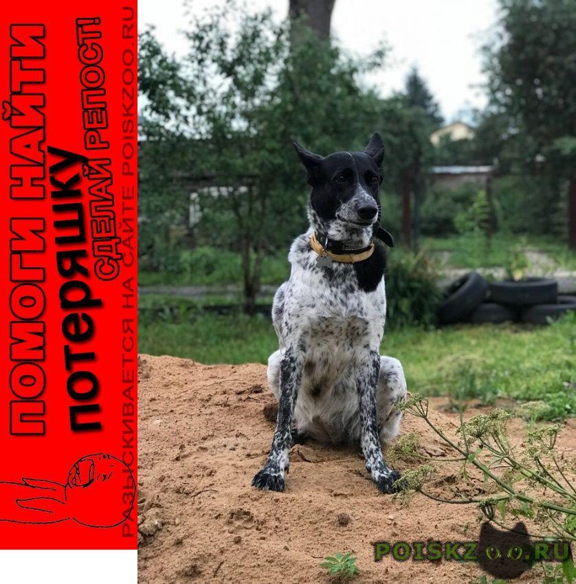 Пропала собака ищем члена семьи  помогите  г.Москва