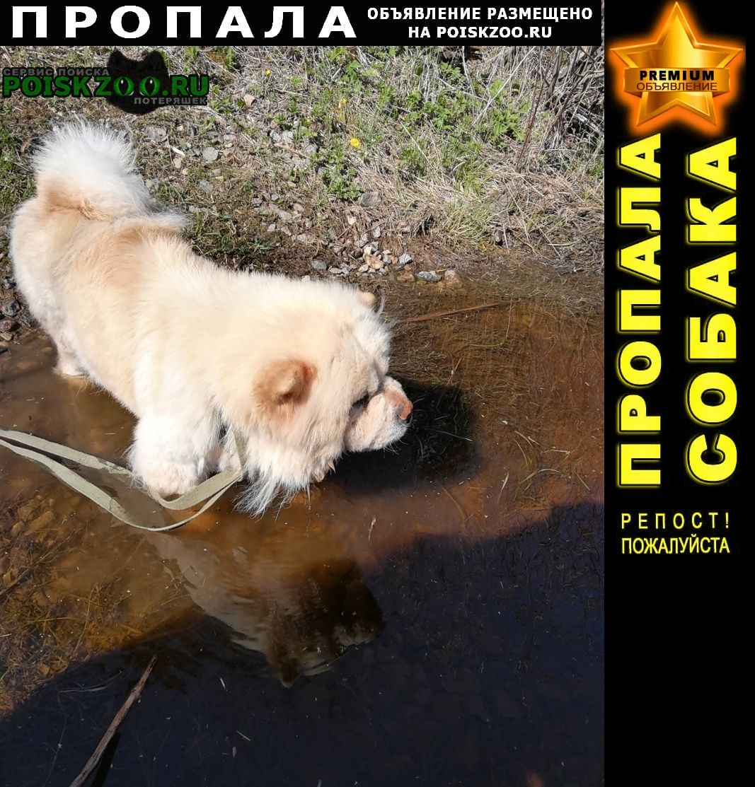 Пропала собака кремовая чау-чау Коммунар