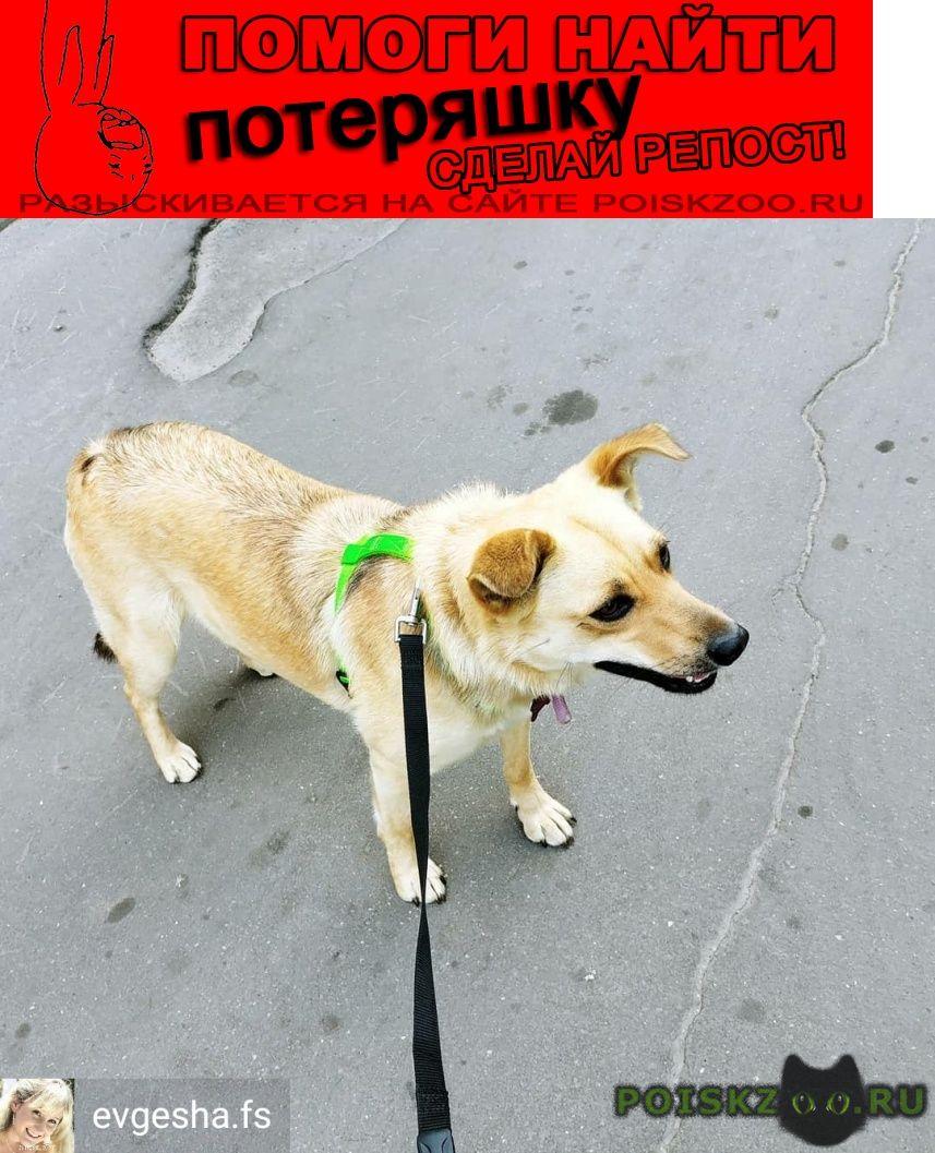 Пропала собака южное и северное бутово, щербинка г.Москва