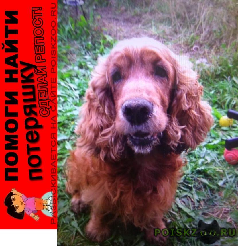 Пропала собака кобель московская область английский кокер г.Щербинка