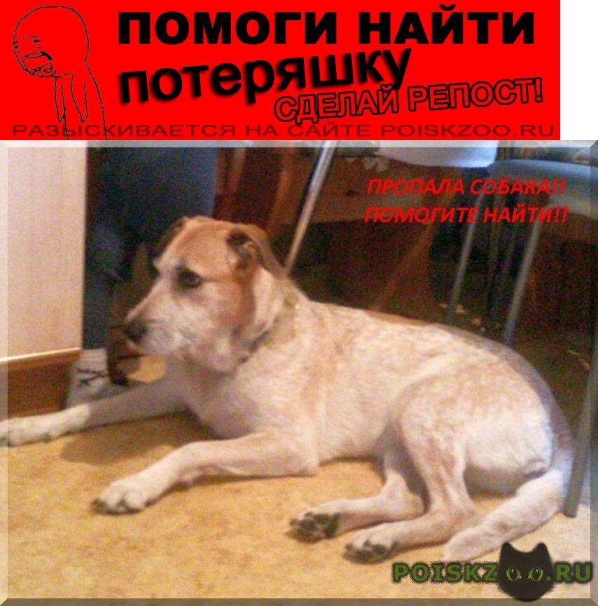 Пропала собака помогите найти г.Москва