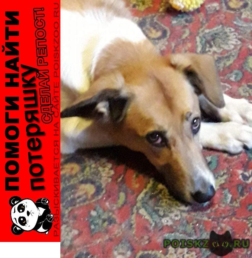 Пропала собака г.Конаково