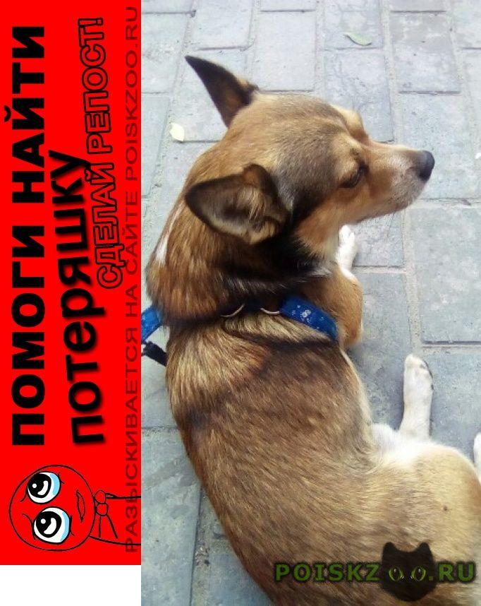 Пропала собака кобель томик г.Мурманск