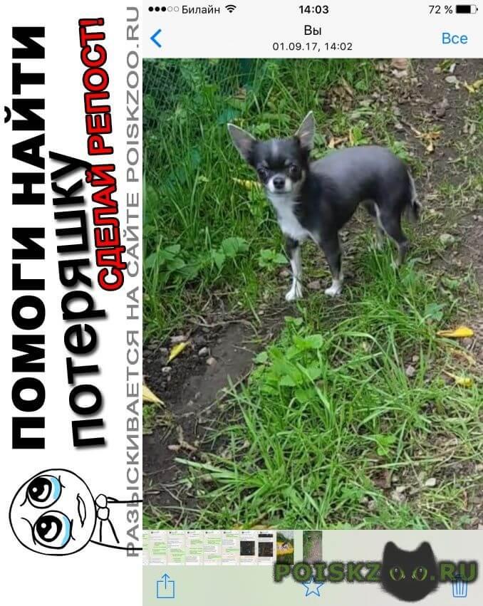 Пропала собака чихуахуа девочка г.Москва
