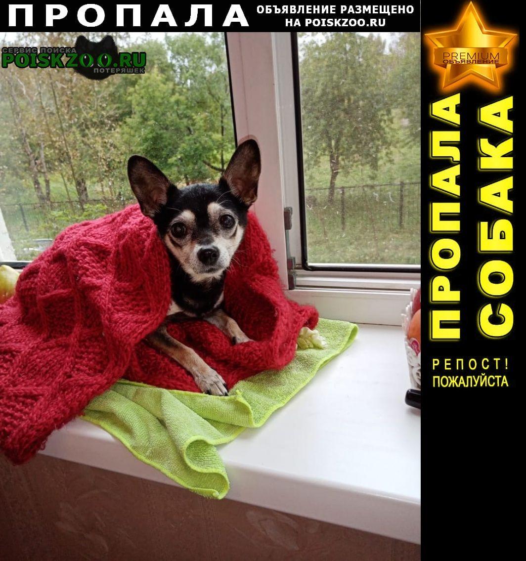 Пропала собака подобрали Комсомольск-на-Амуре
