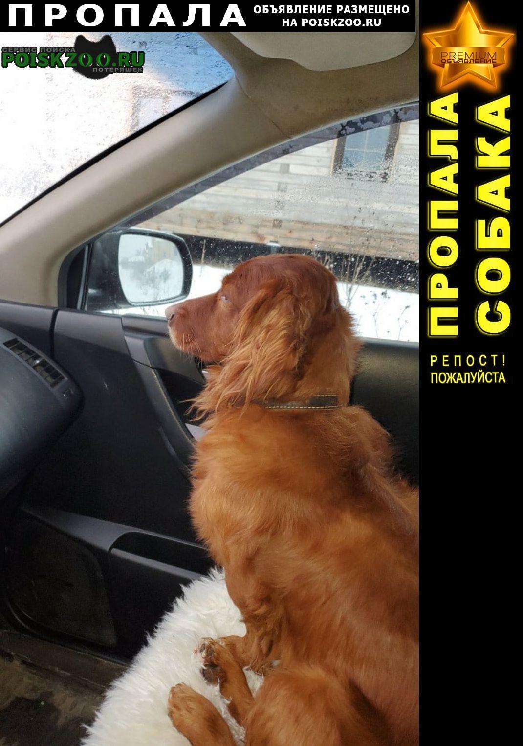 Пермь Пропала собака