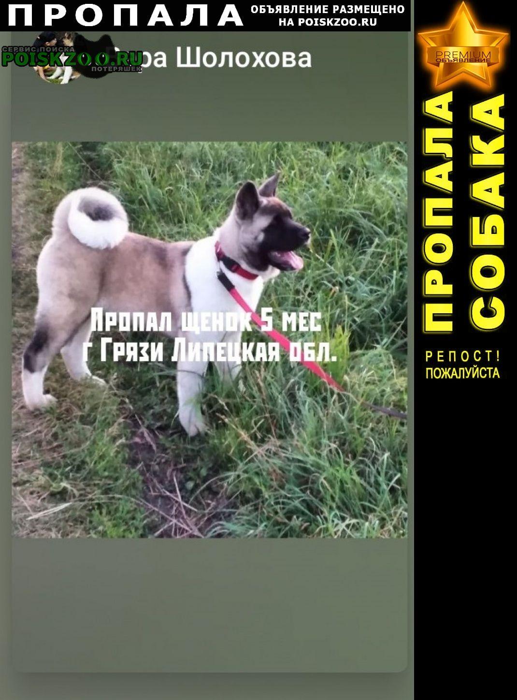 Пропала собака Грязи