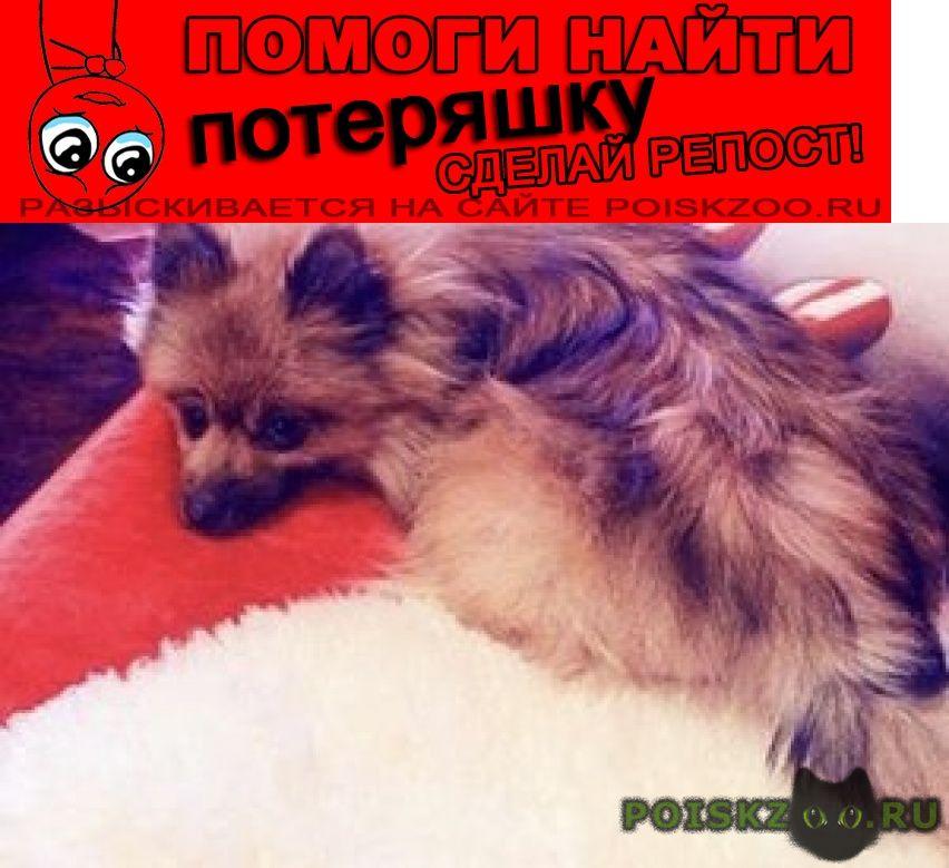 Пропала собака помогите найти г.Волгоград