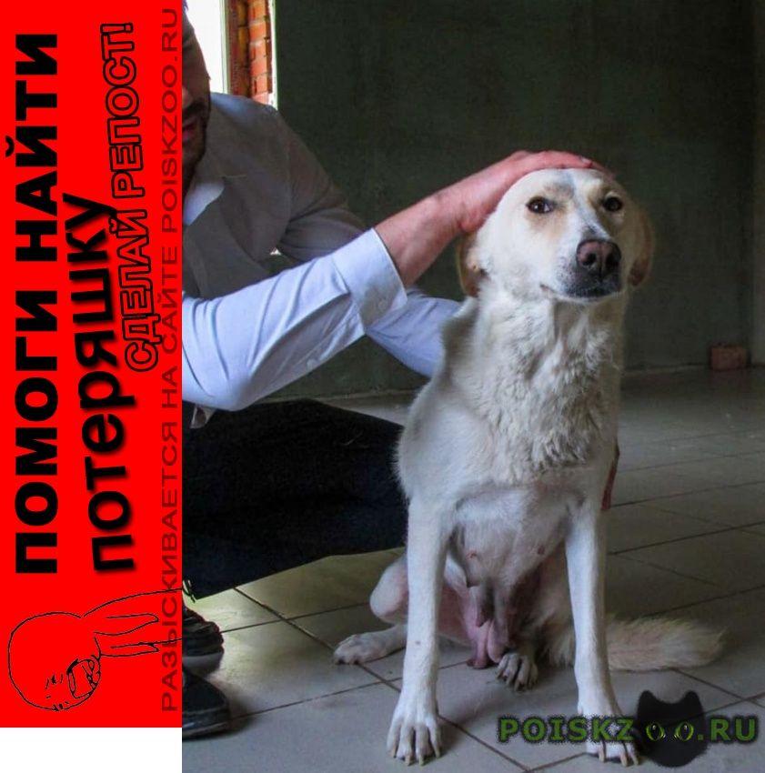 Пропала собака требуется помощь в поиске  г.Тула