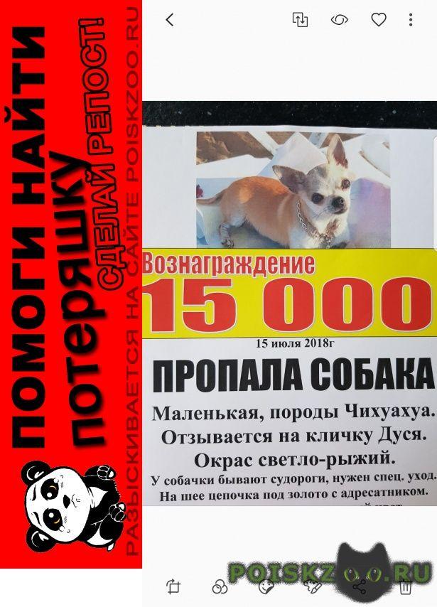 Пропала собака член семьи. помогите найти г.Анапа