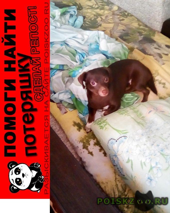 Пропала собака г.Нижний Тагил