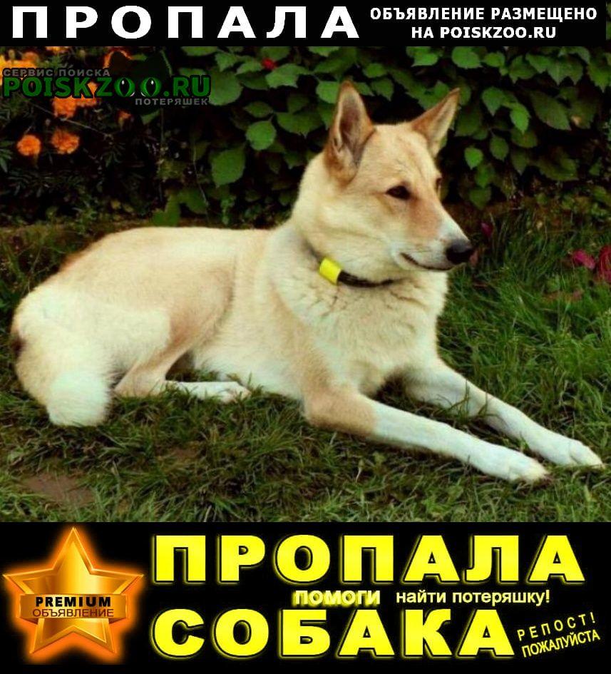 Пропала собака потерялась лайкa Истра