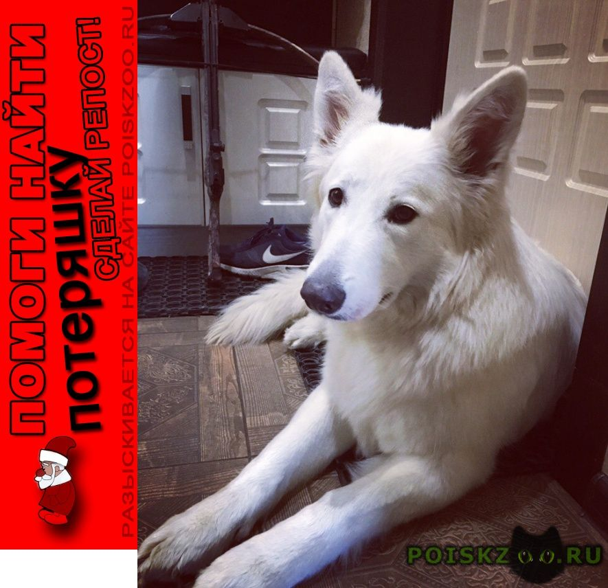 Пропала собака алиса г.Москва