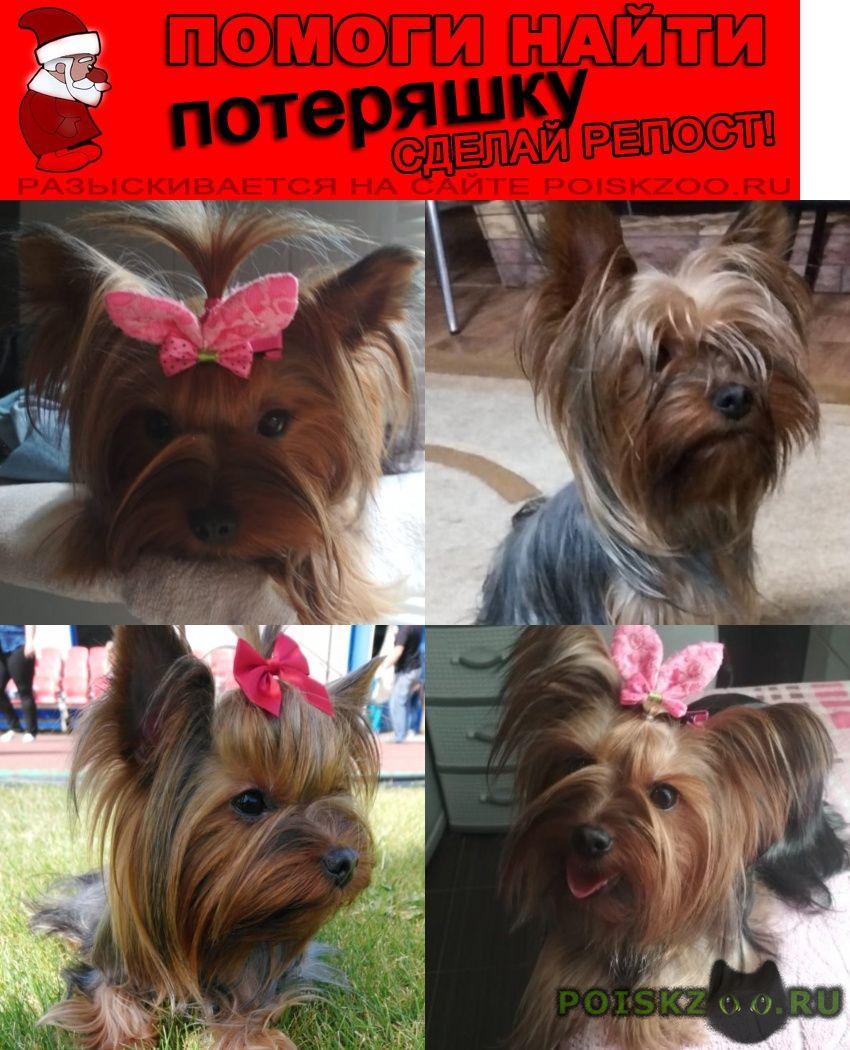Пропала собака пожалуйста помогите найти нашу дочешньку г.Липецк