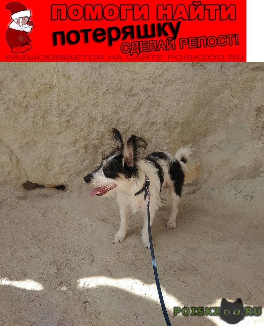 Пропала собака кобель прошу вас помочь г.Севастополь